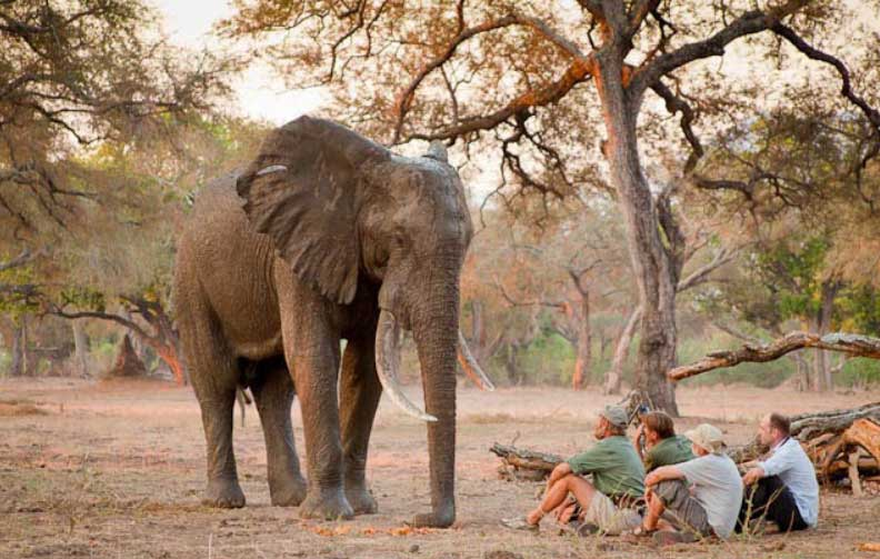 Goliath Safaris met Stretch Ferreira in Mana Pools Zimbabwe