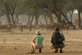 Safari Mana Pools Zimbabwe