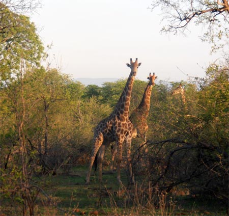 Op safari in Save Valley Conservancy