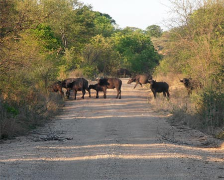 Game drive in Save Valley Conservancy