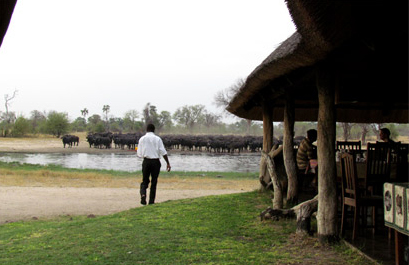 Bomani Safari Camp